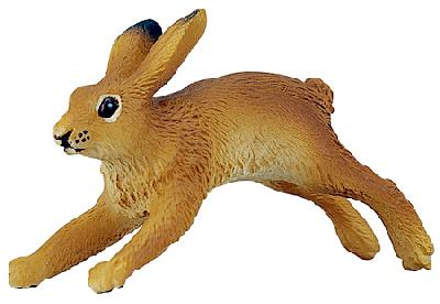 Wild Safari Hare