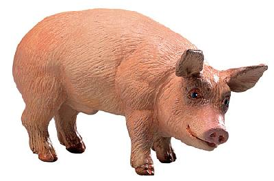 Safari Farm Boar