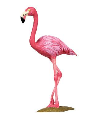 Wild Safari Flamingo