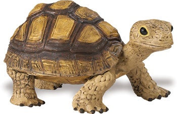Tortoise (Incredible Creatures)
