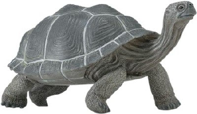 Galapagos Adult Tortoise (Incredible Creatures)