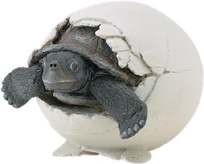 Galapagos Tortoise Hatchling (Incredible Creatures)