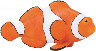 Clown Anemonefish (Incredible Creatures)