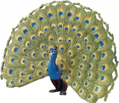 Wild Safari Peacock