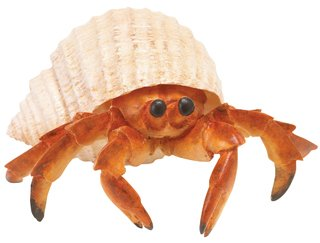 Hermit Crab (Incredible Creatures)