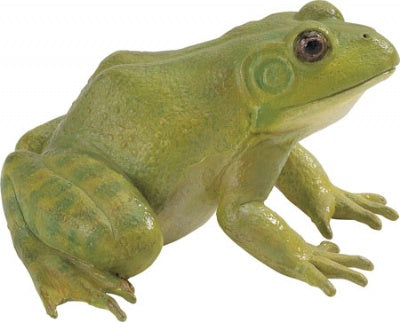 American Bullfrog (Incredible Creatures)