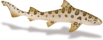 Wild Safari Leopard Shark