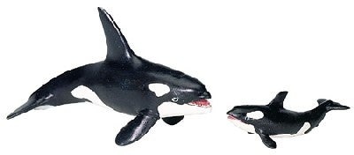 Wild Safari Killer Whale