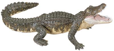 Wild Safari Alligator