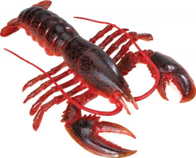 Maine Lobster (Incredible Creatures)