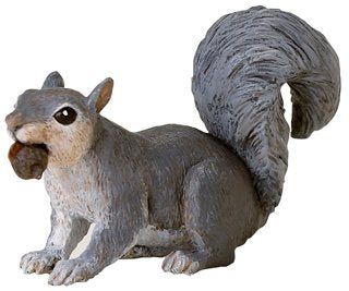 Wild Safari Grey Squirrel with Acorn