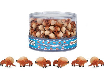 Mini Hermit Crabs (1 Hermit Crab)
