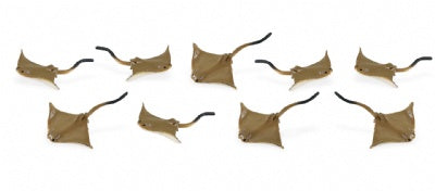 Mini Cownose Rays (1 Ray)