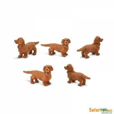 Mini Dachshunds (1 Dachshunds)