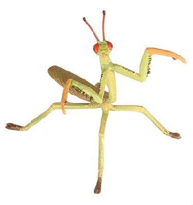 Praying Mantis (Hidden Kingdom)