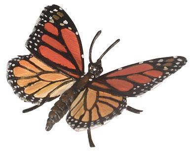 Monarch Butterfly (Hidden Kingdom)