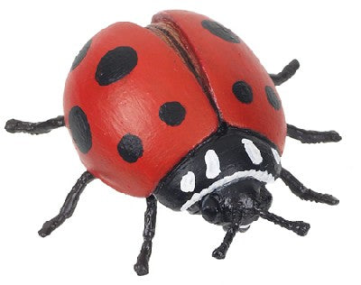 Red Ladybug (Hidden Kingdom)