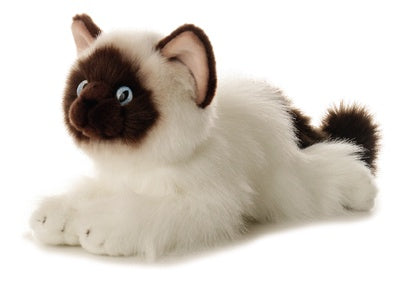 Bella the Birman Cat (Flopsie)