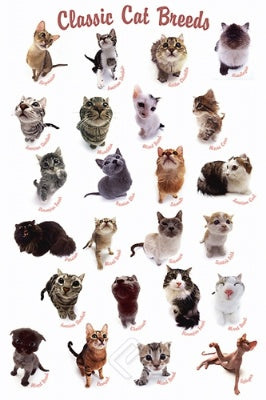 (E22) Cat Breeds Poster