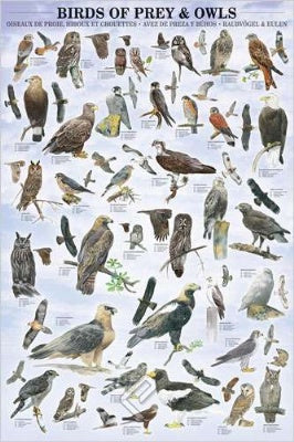 (E78) Birds of Prey & Owls Poster