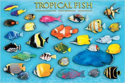 (E100) Tropical Fish Poster