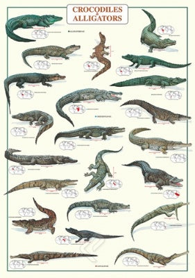 (E118) Crocodiles & Alligators Poster