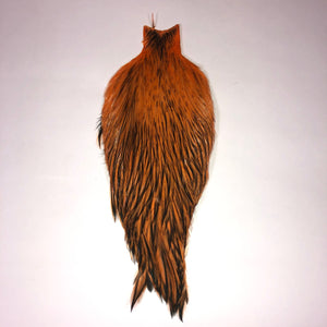 American Rooster Cape