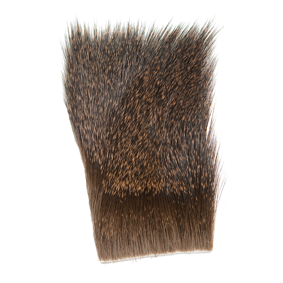 Coastal Blacktail Deer Body Hair
