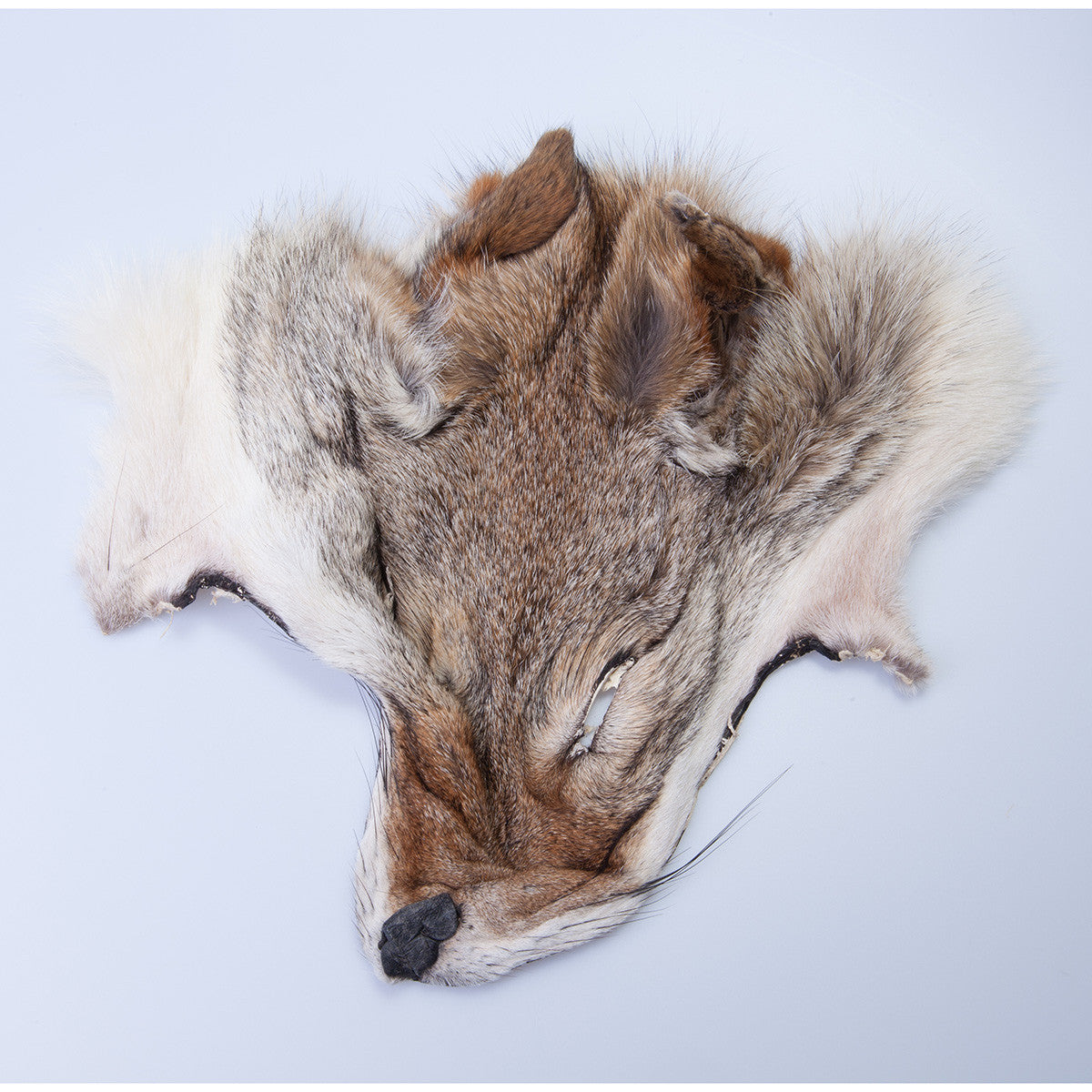 Coyote Face Mask
