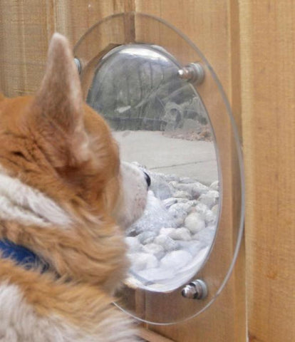 Pet Fence Window lets your dog or cat peek through the fence.