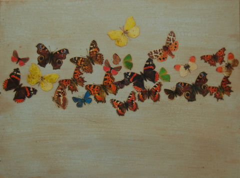 Irish Butterflies