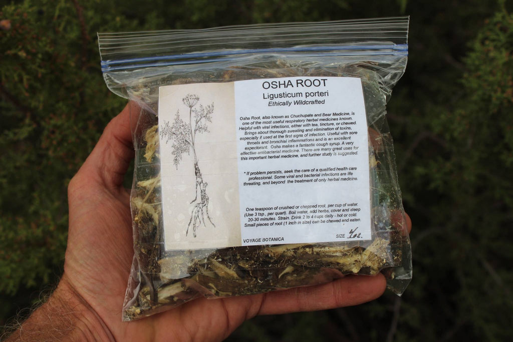 OSHA ROOT - Ligusticum porteri - 4 Ounces Dry Root - Order Now and SAVE!  Will be shipped in Mid - April
