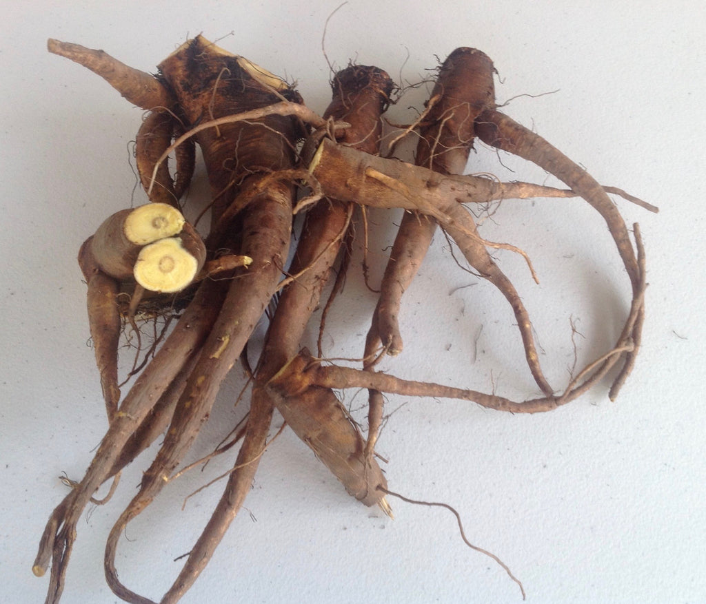 FRESH YELLOW DOCK ROOTS - Rumex Crispus - 1 Pound Fresh Roots - Next Delivery SPRING/2020