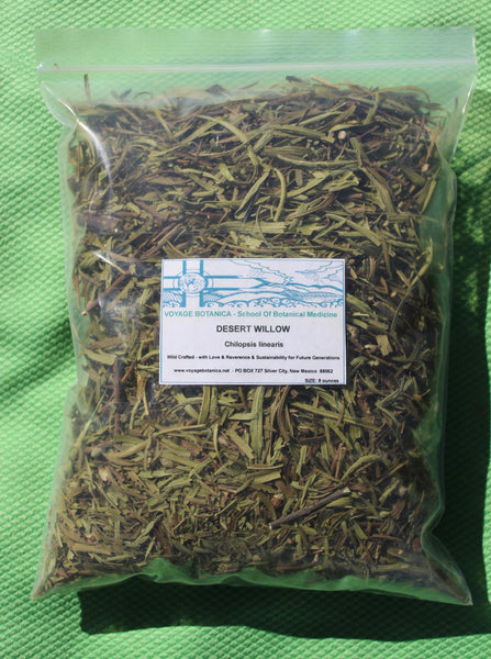 Desert Willow - Chilopsis linearis - 8 Ounces - Ready for shipping after June 10th!