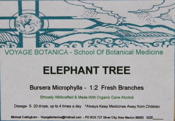 ELEPHANT TREE EXTRACT  (Bursera microphylla) -   4 ounce size