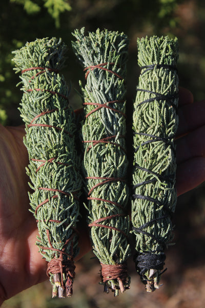 ARIZONA CYPRESS - Cupressus arizonica - Smudges for Cleansing, Blessing, Protection (3 count)