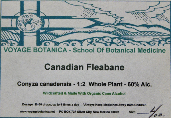 CANADIAN FLEABANE - Conyza canadensis - 4 Ounce - Fresh Plant Extract