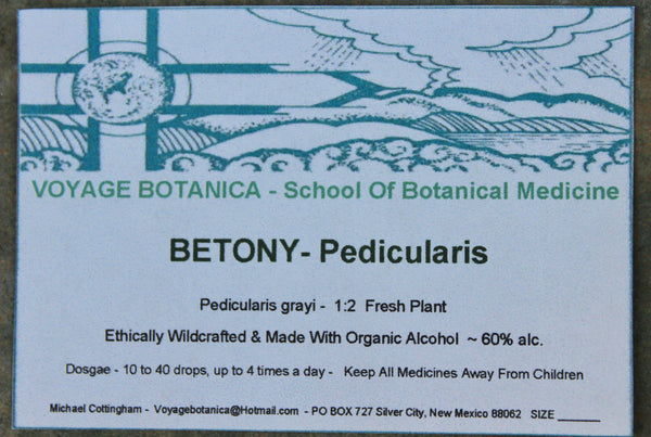 BETONY - Pedicularis grayi  - 2 Ounce Size -
