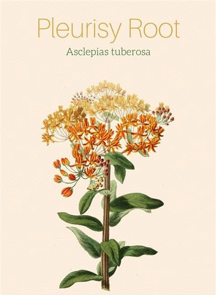 PLEURISY ROOT Asclepias tuberosa Extract - 4 Ounce Size