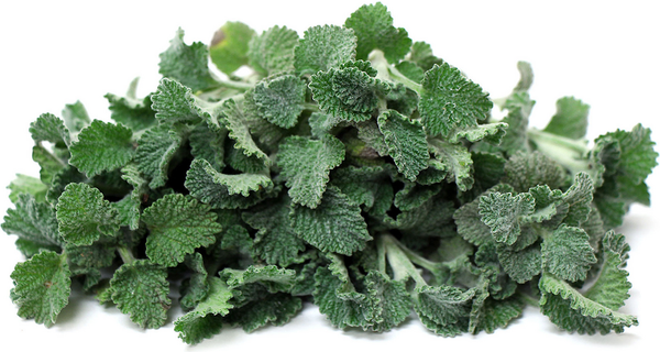 HOREHOUND - Marrubium vulgare - 3 Ounces (Dry) Leaf and Flower -