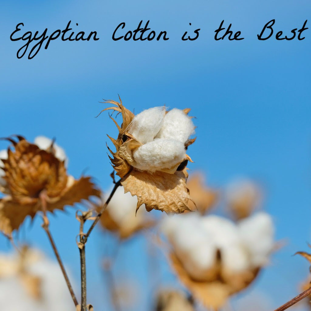 Egyptian cotton or Supima cotton