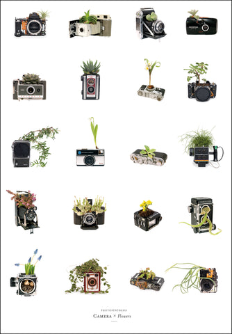 Photosynthesis - Camera x Flowers - A2 POSTER
