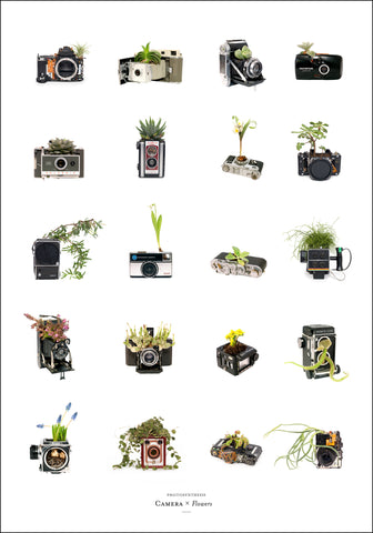 Photosynthesis - Camera x Flowers - 70x100cm POSTER