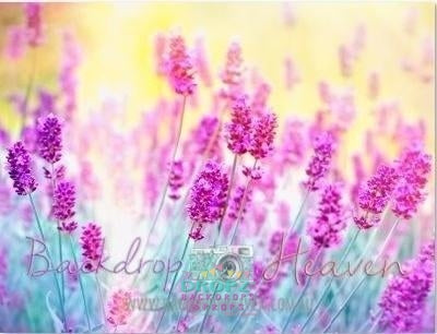 Backdrop - Lavender Field