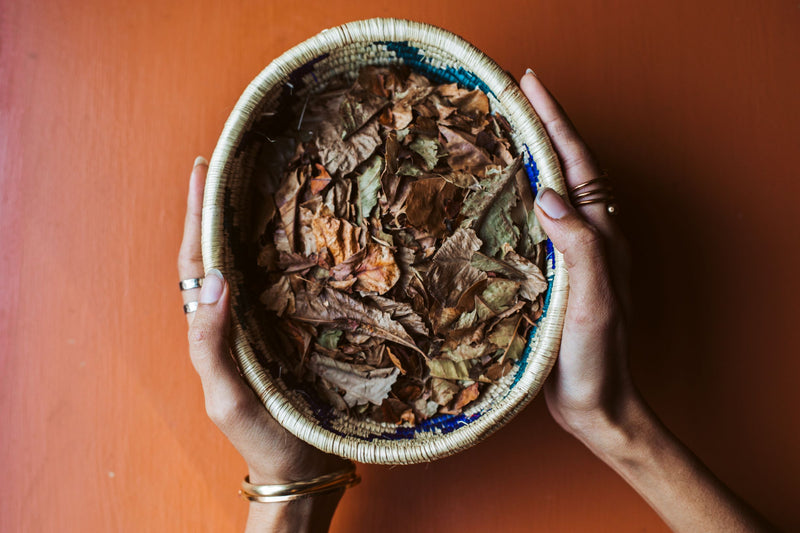 Kuti |ቁጢ| Coffee Leaf Tea