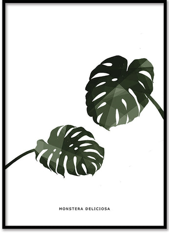 Monstera del. polygon