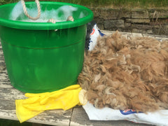 Washing Alpaca Fibre/Fleece