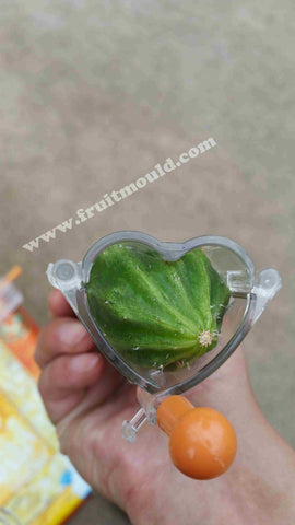 heart cucumebr  shaped on the molds