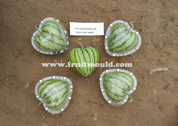 Heart shape watermelon molds for sale (free shipping)