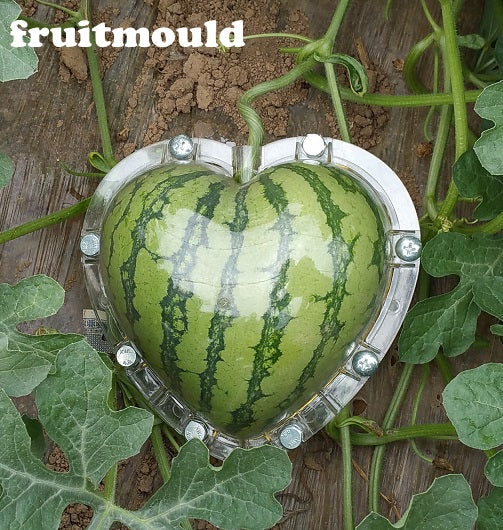 Square Watermelons And Apples Heart Or: Square And Heart Shape Watermelon Mold Kit Package One Of